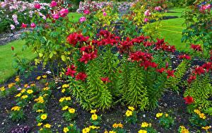 Фотография Парки Лилии Queen Elizabeth Park Цветы