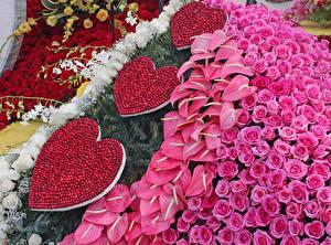 Фото Розы Антуриум Дизайн Сердце Pasadena Цветы