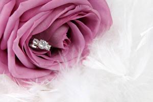Картинки Розы Вблизи Кольцо Цветы