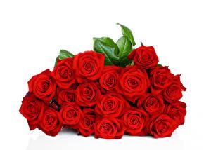 цветы красные картинки