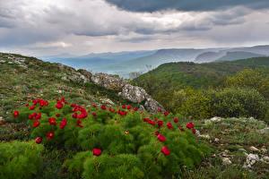 Обои Россия Крым Пейзаж Маки Холмы Кусты Природа