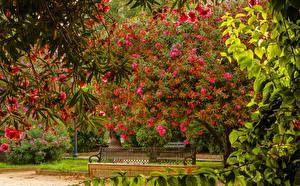 Обои для рабочего стола Испания Сады Цветущие деревья Скамейка Ветки Seville Maria Luisa Park Природа