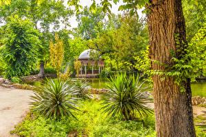 Картинка Испания Парки Пруд Ствол дерева Кусты Деревья Maria Luisa Park Sevilla