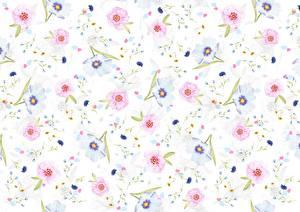 Фотография Текстура Маргаритка Белый фон Цветы