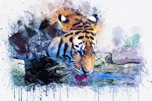 Фотографии Тигр Картина Рисованные Пьет воду животное