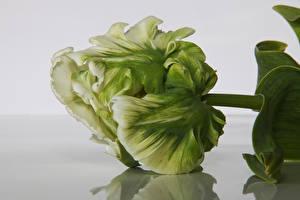 Картинки Тюльпаны Вблизи Цветы