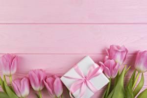 Фотография Тюльпаны Подарки Розовый Цветы
