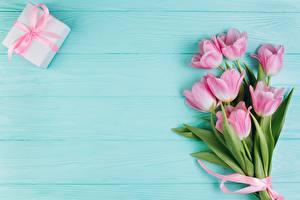Картинки Тюльпаны Розовые Цветы