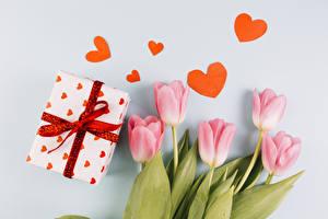 Фотография Тюльпаны День святого Валентина Серый фон Розовый Сердце Подарки Цветы