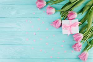 Фотография Тюльпаны День всех влюблённых Розовый Доски Цветы
