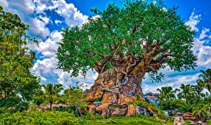 Картинка Штаты Диснейленд Парки Калифорния Анахайм Дизайн Деревья HDRI Природа