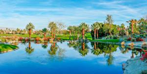 Фотографии Штаты Озеро Берег Калифорния Пальмы Palm Desert Природа