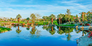 Фотографии США Озеро Берег Калифорнии Пальмы Palm Desert Природа