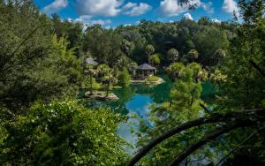 Картинки Штаты Парки Озеро Леса Флорида Пальмы Cedar Lakes Woods and Gardens