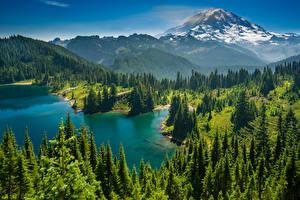 Картинка США Парки Озеро Горы Леса Пейзаж Маунт-Рейнир парк Ель Lake Eunice Природа