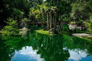 Фото Штаты Парки Пруд Мосты Флорида Пальмы Cedar Lakes Woods and Gardens