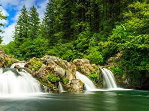 Картинки США Парки Водопады Леса White River Falls State Park