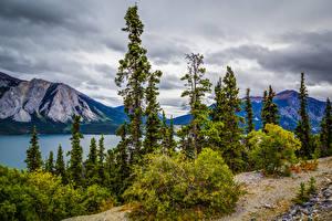 Картинки Аляска Горы Озеро Кусты Деревья Tutshi Lake Природа