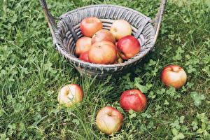 Фотографии Яблоки Корзинка Траве Пища