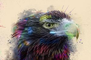 Картинки Птицы Ястреб Клюв Смотрит by 0l-Fox-l0 Животные