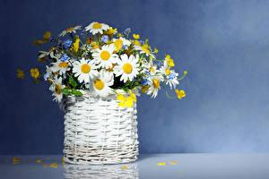 Обои Букеты Ромашки Корзинка Цветы