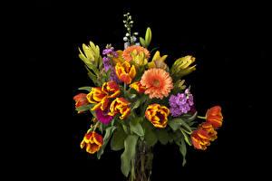 Картинки Букет Тюльпаны Гербера Маттиола Черный фон Цветы