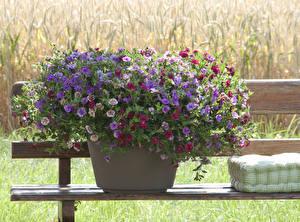 Фото Калибрахоа Скамья Цветочный горшок Цветы