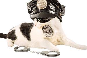 Фото Коты Белый фон Полицейские Униформа Наручники Животные