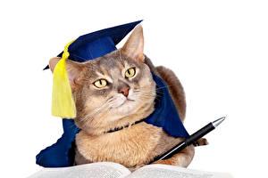 Картинка Кошки Белый фон Униформа Взгляд Шариковая ручка Животные
