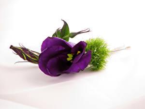 Картинка Эустома Вблизи Фиолетовый цветок