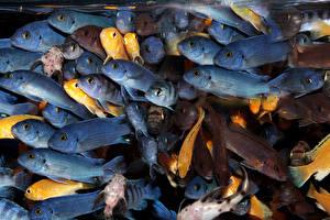 Фото Рыбы Много Животные