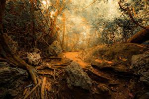 Фотографии Леса Камень Деревья jungle