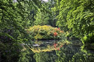 Фото Германия Парки Пруд Деревья Rhododendron-Park Bremen Природа