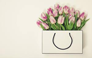 Фотографии Сумка Тюльпан Много Цветной фон цветок