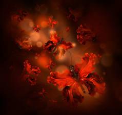 Фотографии Ирис Бабочки Красная цветок