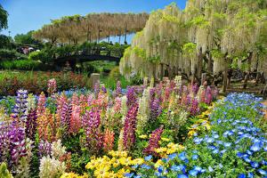 Фотографии Япония Токио Парки Глициния Люпин Природа Цветы