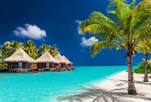 Фотография Мальдивы Тропики Берег Бунгало Пальмы Природа