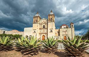 Фотографии Мексика Храмы Церковь Кактусы Santo Domingo Oaxaca город