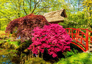 Фотография Нидерланды Сады Мосты Пруд Кусты Japanese garden Hague