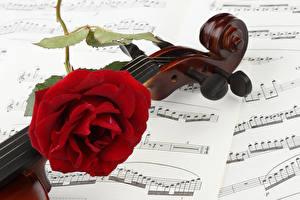 Картинка Ноты Розы Вблизи Скрипки Красный Цветы