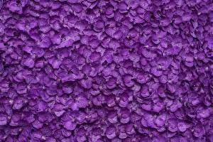 Фотография Орхидеи Текстура Фиолетовый Лепестки цветок