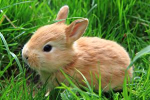 Обои Кролики Трава Животные