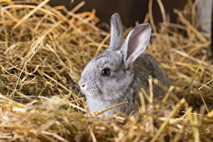 Фотография Кролики Сено Животные