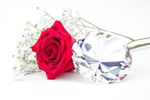 Фотография Розы Вблизи Алмаз обработанный Белый фон Красный