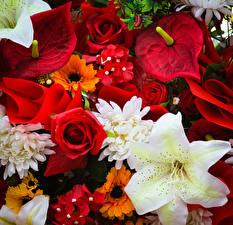 Фотографии Розы Лилии Антуриум Цветы