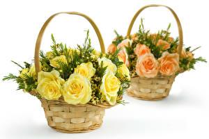 Фото Розы Белый фон Двое Корзинка Цветы