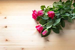 Обои Розы Доски Красный