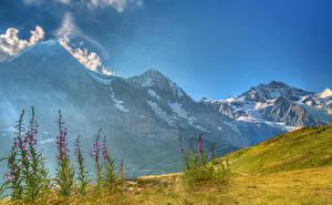 Фотографии Швейцария Горы Альпы Кусты Berneroberland Природа
