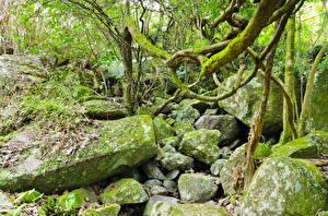 Фотография Тропики Леса Камни Мох jungle Природа