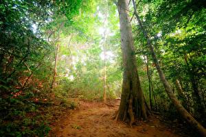 Картинки Тропики Лес Ствол дерева jungle